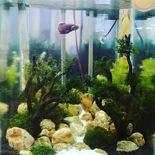 Aquascape Design 1000 Aquascape Design Ideas Android Apps On Google Play