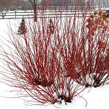 winter gardening archives official blog of park seed