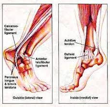 High Ankle Sprain Anatomy Sprained Ankle Pilot Health Advocates Inc