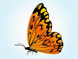 orange butterfly vector vector art u0026 graphics freevector com