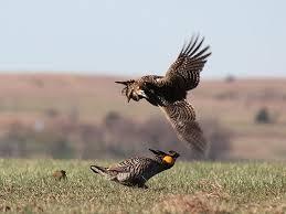 Kansas wildlife images Pfw kansas region 6 jpg