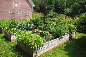 Raised Bed Gardening On The Rise The Benefits Of Raised Bed Gardening Green Mountain