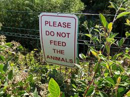 do not feed the animals wikipedia