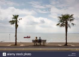palm trees on the seafront at southend on sea in essex photo by