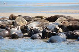 Best Shopping In Cape Cod - best places to see seals on cape cod