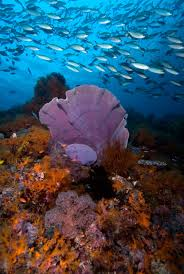 marine animals in human medicine will a sponge save your life