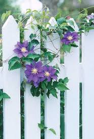 382 best flowering fences images on pinterest gardens spring