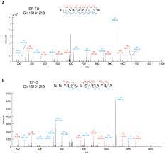 transfer rnas mediate the rapid adaptation of escherichia coli to