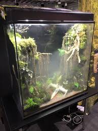 dagobah sw terrarium jpg wars php