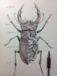 mechanic tattoo drawing drawn bug mechanical pencil and in color drawn bug mechanical