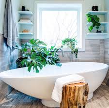 best indoor plants for bathrooms interior design inspo tree