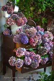 dried hydrangeas the secret to drying hydrangeas with no wrinkled petals in