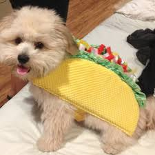 Doge Halloween Costume Taco Small Dog Halloween Costumes Cute Dog Costumes