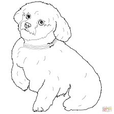 short hair maltese dog coloring free printable coloring pages