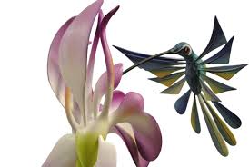 orchids for sale hummingbird and orchids genuine oaxacan