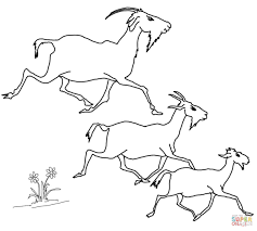 elder middle and the youngest billy goats coloring page free
