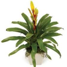 order online indoor plants as gifts with online delivery indoor