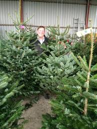 croots farm shop creates hanging christmas tree forest in