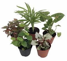Common Tropical House Plants - how to make a fairy garden terrarium
