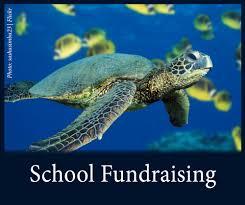 classroom resources u2014 see turtles