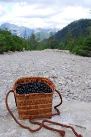 edible native plants pacific northwest how to pick huckleberries in the pacific northwest u2013 live eat