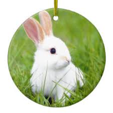 white rabbit ornaments keepsake ornaments zazzle
