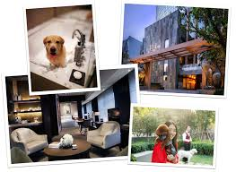 Cat Friendly Home Design Hotels For Dogs Pet Friendly Boutique U0026 Luxury Hotels Tablet