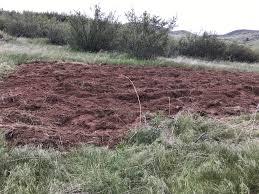 starting a backyard vineyard steinadler farm