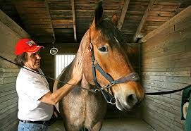 Massachusetts how far can a horse travel in a day images Reining in ptsd with equestrian therapy veterans health jpg
