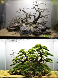 Aquarium Decoration Ideas Freshwater Google Image Result For Http Www Tfhmagazine Com Blogs Wp