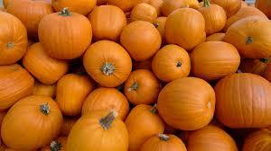 other pumpkins orange halloween crop pumpkin carving wallpaper hd