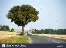a large tree stands by the side of the road that approaches the