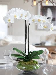 Fake Orchids White Silk Phalaenopsis Orchid Arrangement Nature