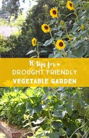 when to plant a vegetable garden in texas vegetable garden