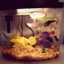 24 best da sea images on fish tanks aquarium