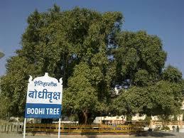 Decorative Trees In India Deekshabhoomi Wikipedia