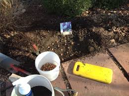 punch list what to do in your denver area garden in late