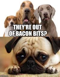 Dog Bacon Meme - out of bacon imgflip