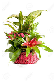 gardening pot with indoor green decorative plants stock photo
