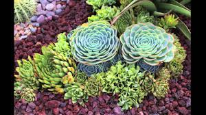 succulent garden design secrets youtube