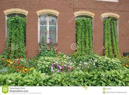 overgrown house windows royalty free stock photography image