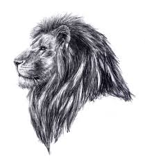lion head tattoo drawing photo 5 real photo pictures images