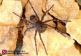 North Carolina vegetaion images Ncsu ent ort 137 common spiders in the landscape jpg