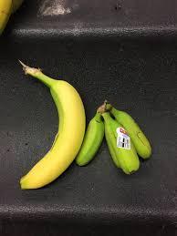 tiny banana tiny bananas album on imgur