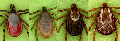 Ticks In Backyard These Chemicals Will Kill The Ticks In Your Yard U2014 Outdoors