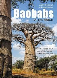 baobabs of the world the trees of madagascar africa