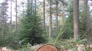 forests november 2017 browse articles forestry an international journal of forest research oxford