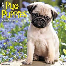 just pug puppies 2017 wall calendar dog breed calendars willow