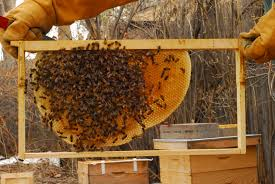foundationless beekeeping how to convert to natural beekeeping