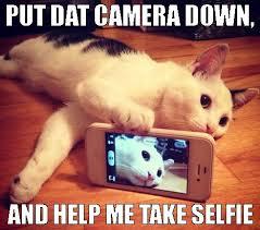 Meme Selfie - selfie cat meme imgur